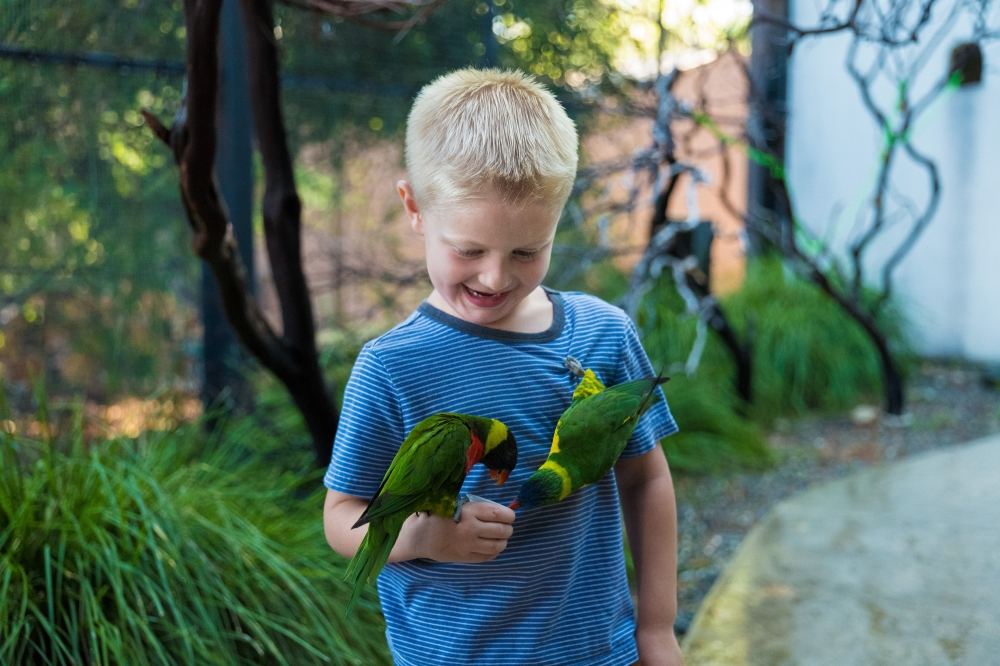 751-feeding-the-lorikeets-at-turtle-bay-