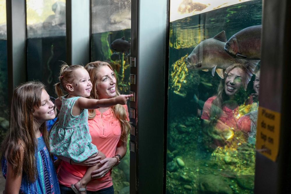 aquarium-at-turtle-bay-exploration-park-